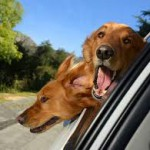 What to do if your dog gets car sick
