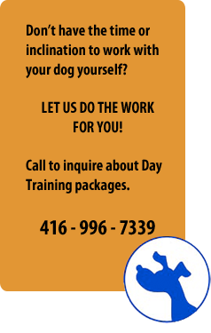 our dog training packages