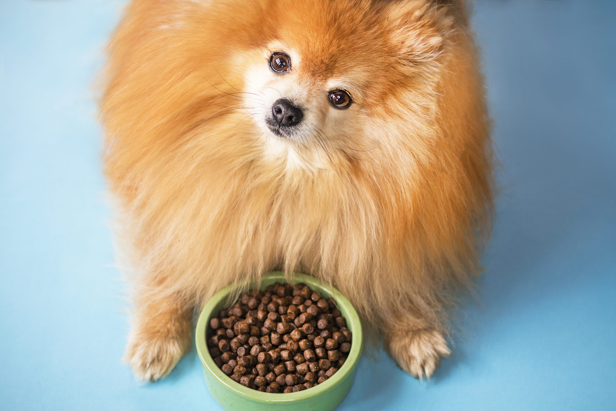 What's REALLY for dinner: understanding dog food labels