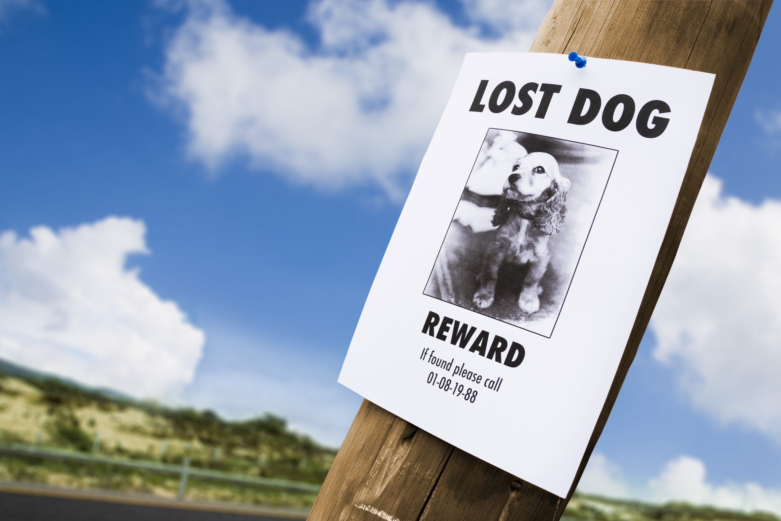 Rover's gone missing? Top 5 tips for finding a lost dog