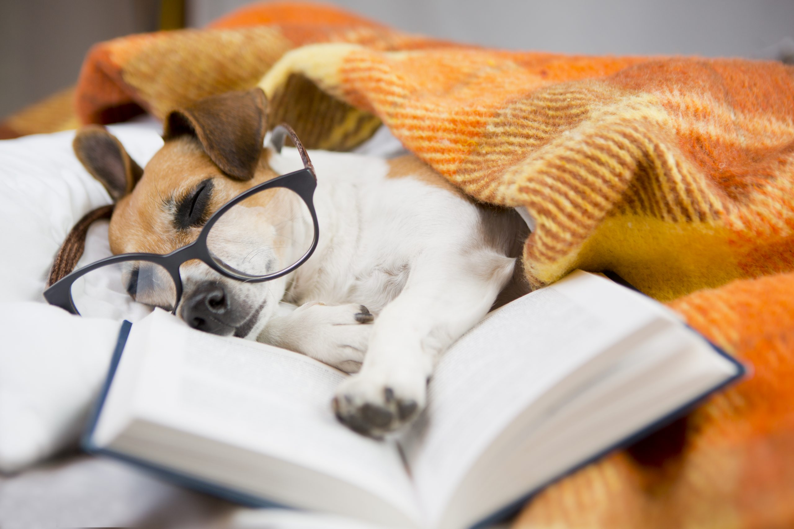 Good reads: top 5 books for dog lovers