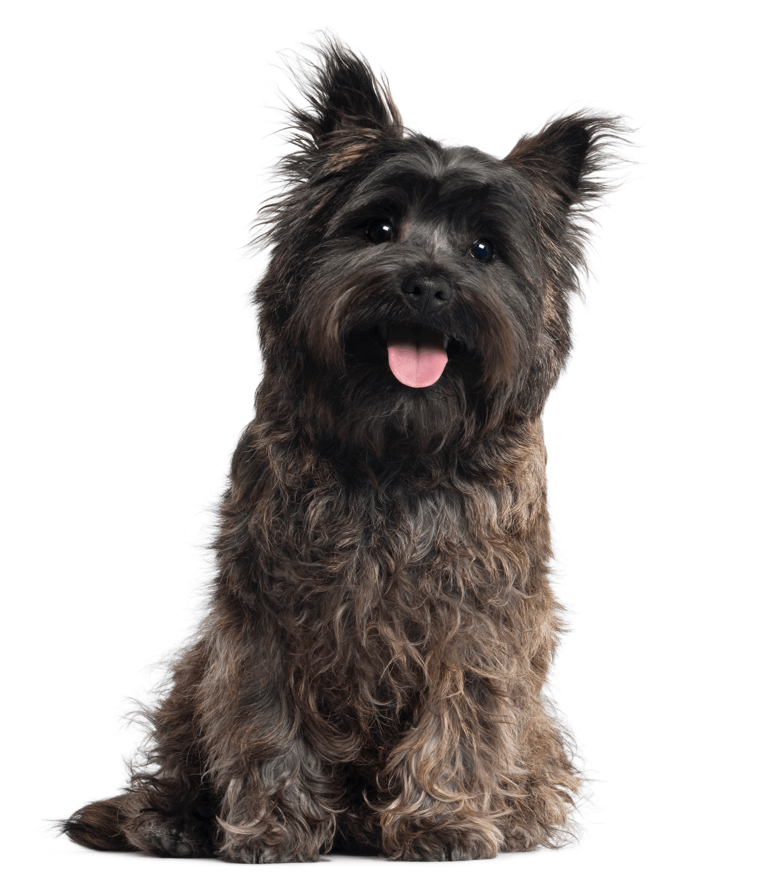 Raising Rover - Private Dog Training and Coaching