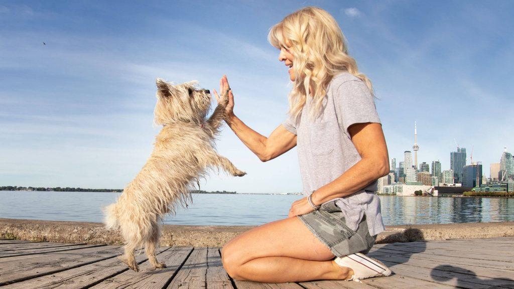 Professional Dog Training in Toronto - Raising Rover - Where Good Dogs Grow