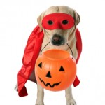 Top 5 tips for a safe Halloween