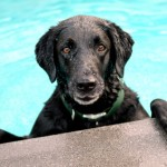 How Cool is Your Dog? Top 5 Tips for Summer Safety