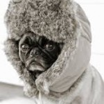 Baby it's cold outside! Top 5 tips for keeping your dog active in winter