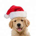 'Tis the Season: Original Gifts for Dog Lovers