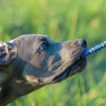 Should you play Tug with your dog?