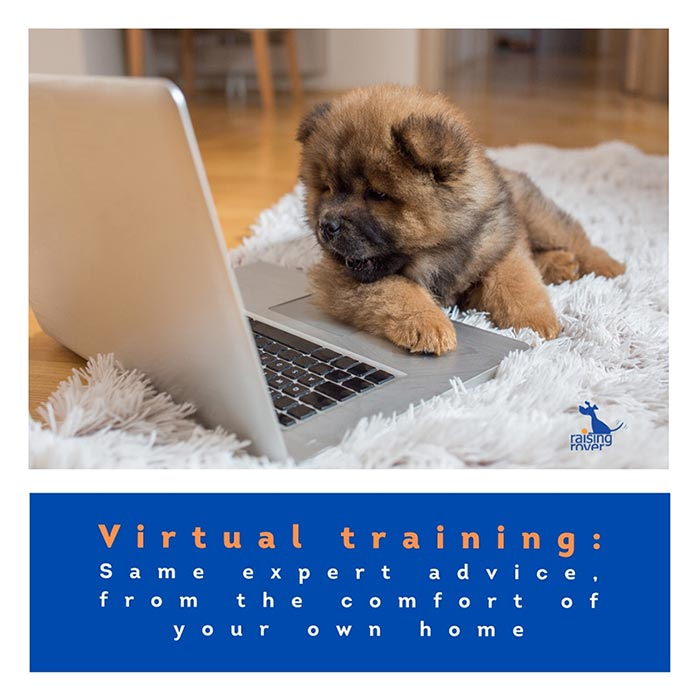 puppy and virtual training info